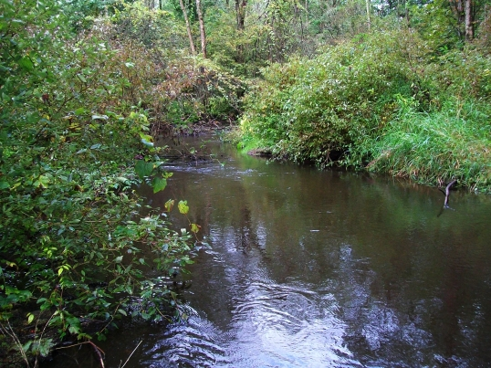 The tributary